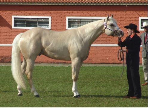 Horses: American Quarter Horse