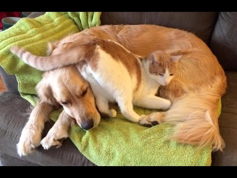 Funny cats annoying dogs video compilation