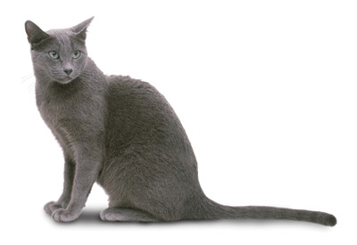Breeders: Russian Blue Cat