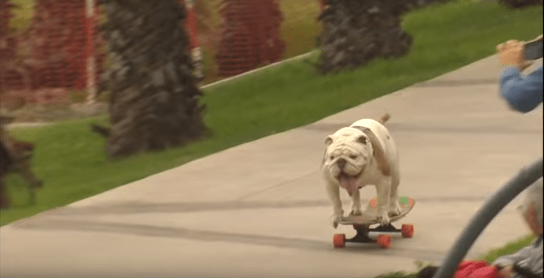 Dogs love skateboarding