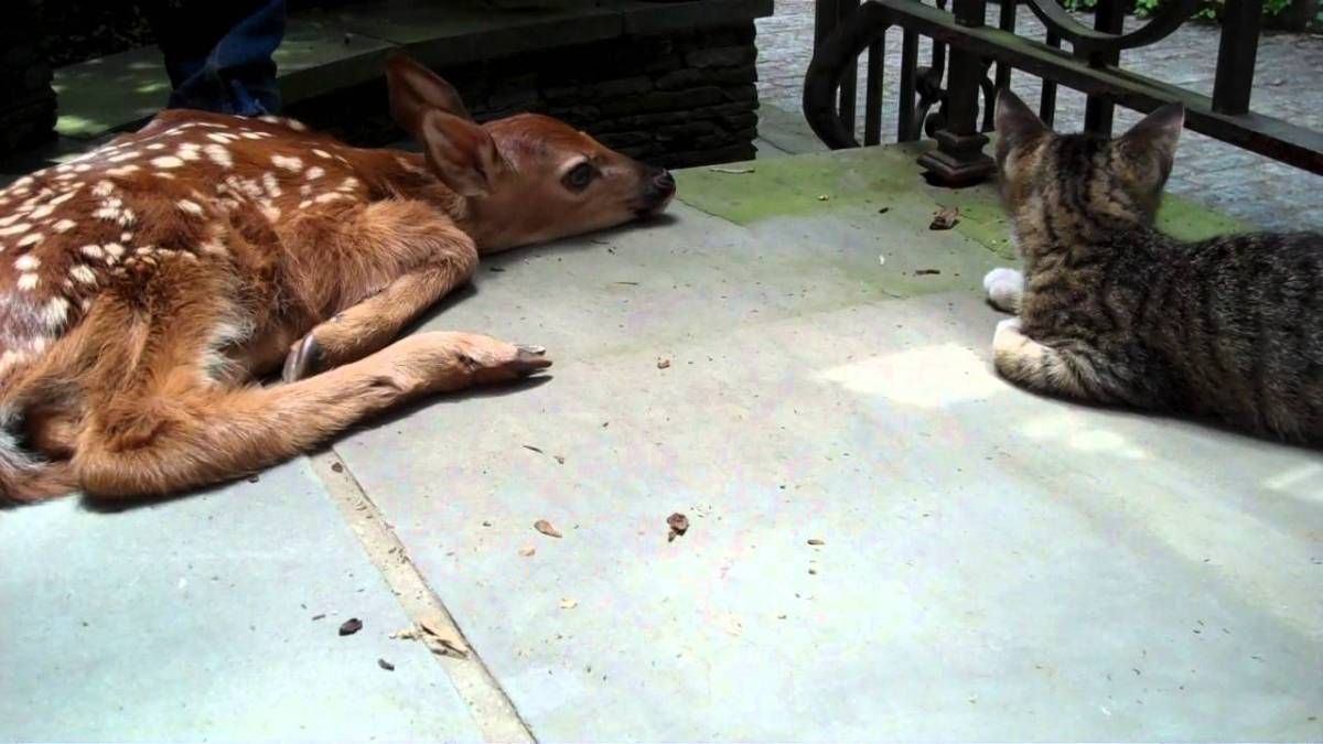 A kitten got excited after seeing a baby deer in the pouch