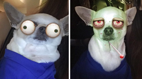 This Snaps of people filtering their pets is just too funny!