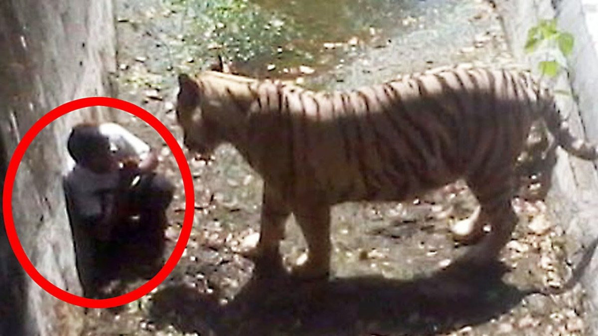 Watch the 5 most shocking animal attacks caught on tape!