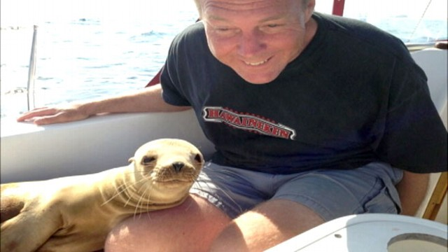 Baby Sea Lion jumps on boat and cuddles with sailor!