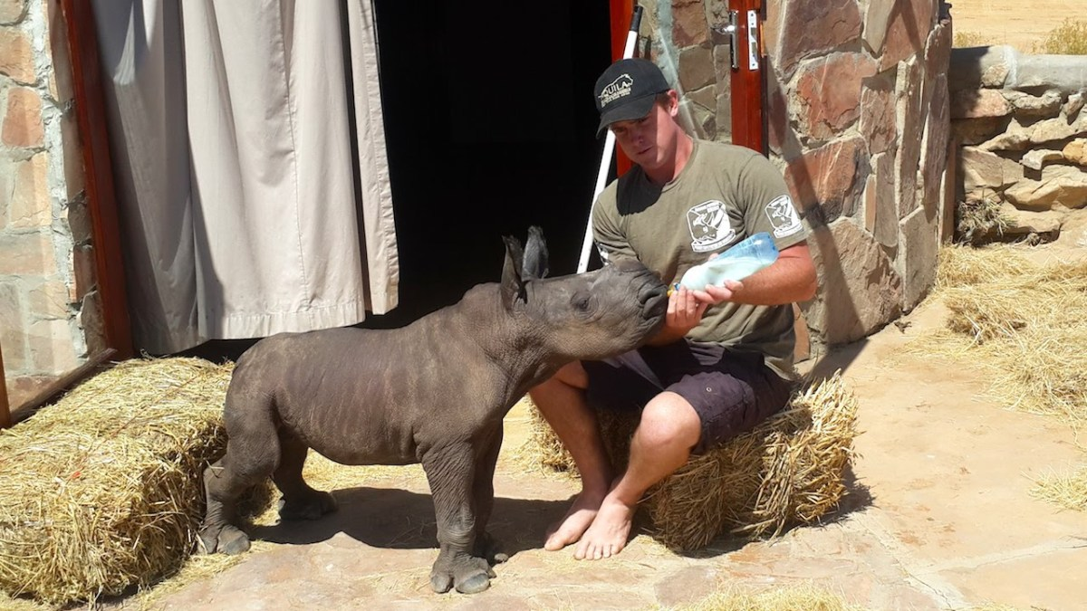 Adorable Baby Rhino Rescued After Being Abandoned By Its Mother