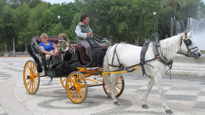 Horse and Buggy rides in Sevillle