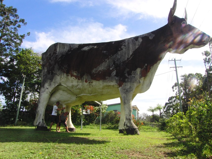 The Big Cow