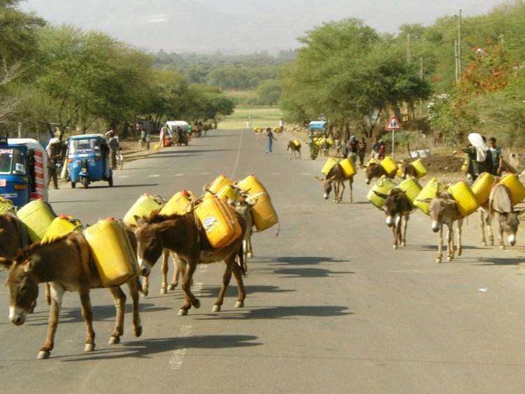 Onderweg in Ethiopië ezels