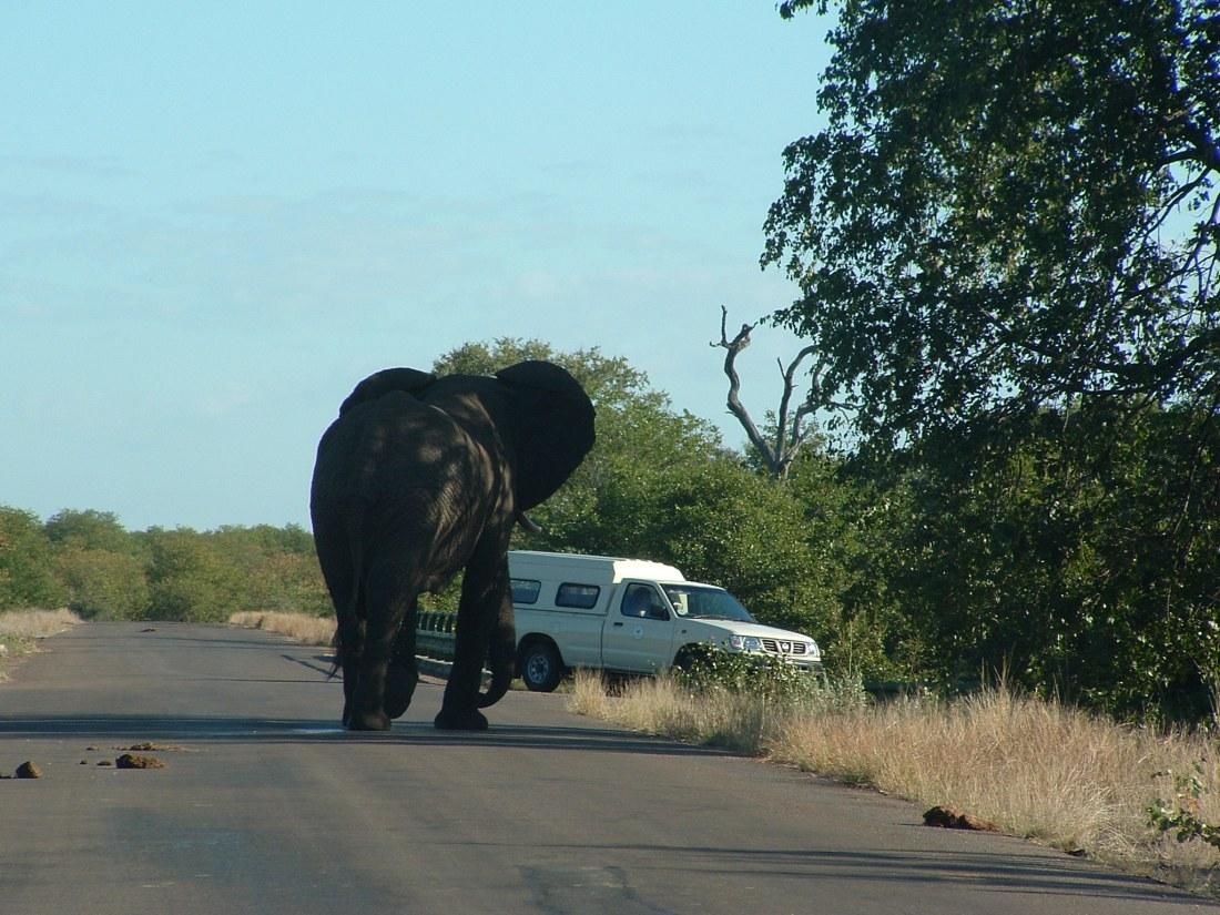 Olifant met auto zuid afrika