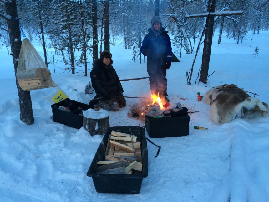 Lapland finland husky tocht honden