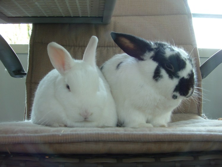 Uddel (links) en Frits (rechts) die precies doen waar ze goed in waren, samen slapen.