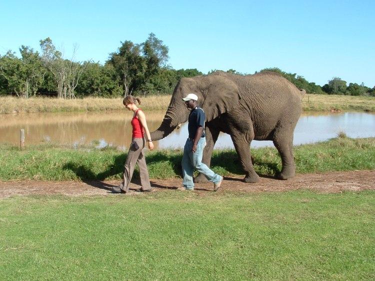 elephant-sanctuary-knysna-3