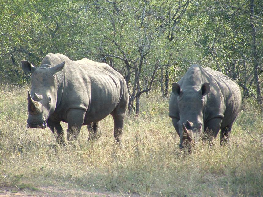 private-game-reserve-kwa-madwala-38 zuid afrika