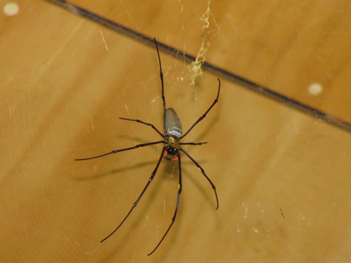 Australie spin dodelijk