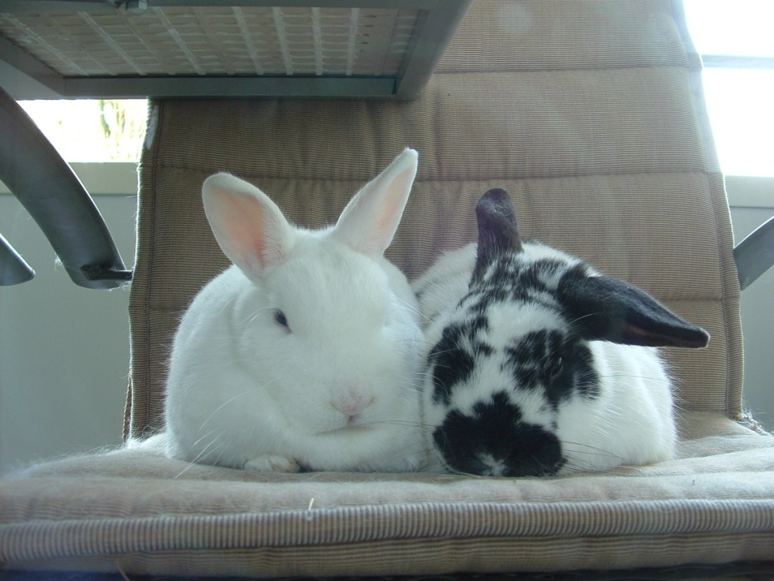 twee konijnen op een tuinstoel