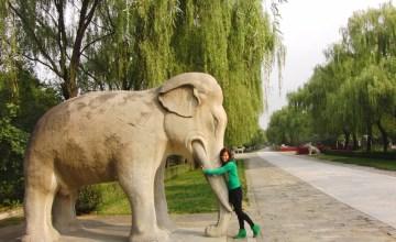 Diervriendelijk olifant knuffelen Beijing China