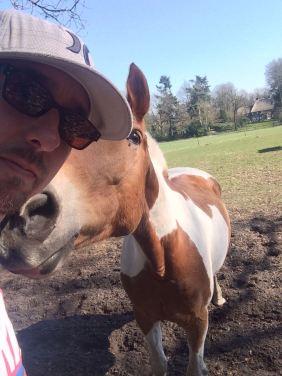 bont paard kusjes geven