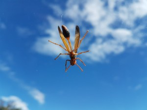 Insect Zuid Afrika