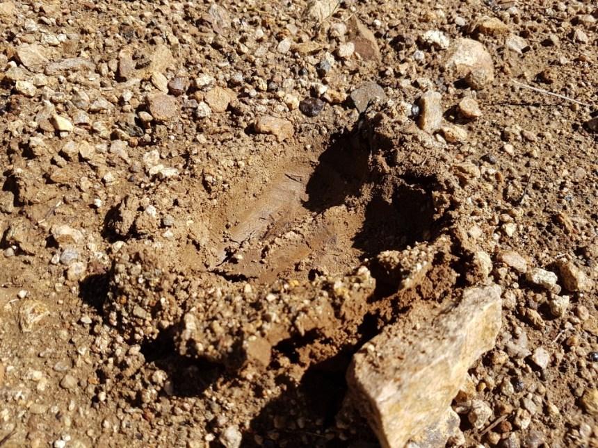 Dierensporen Zuid Afrika