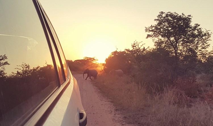 wild spotten zuid afrika olifant