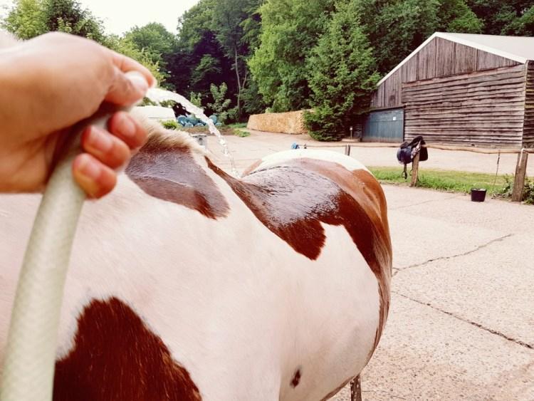 Paard afspoelen in de zomer