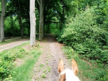 Veluwe paardrijden bosrit