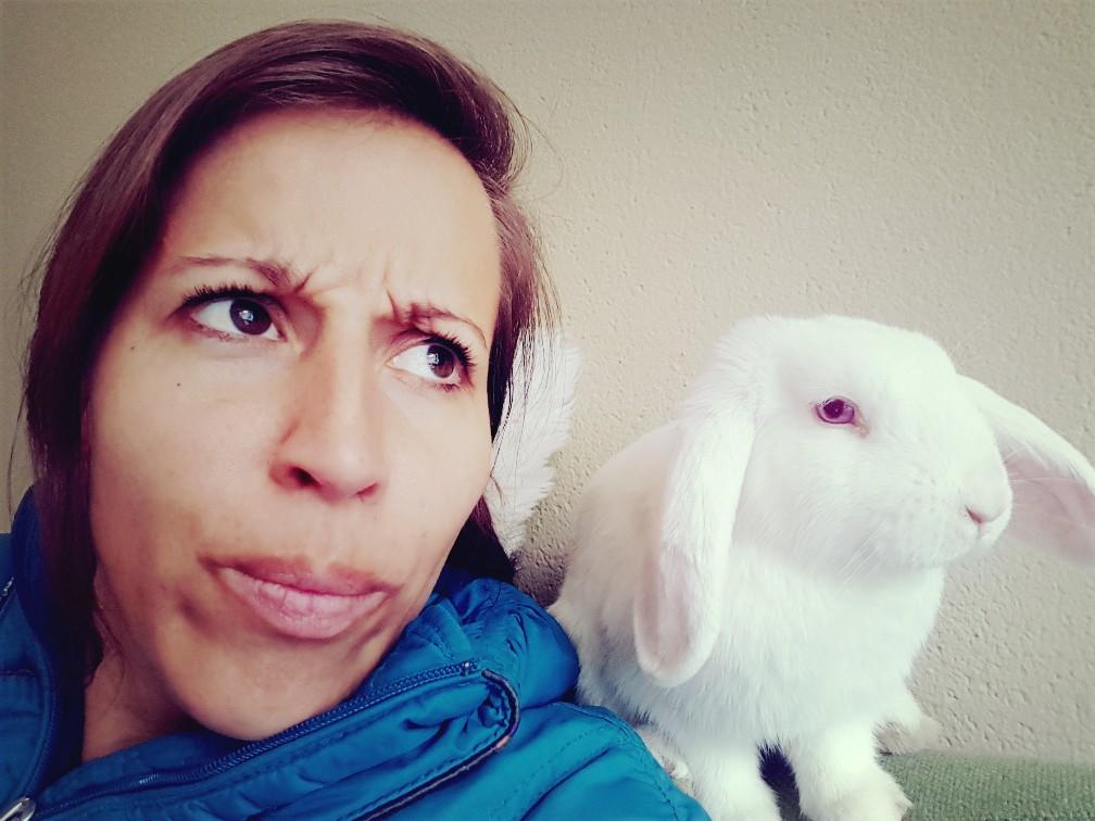 wit konijn zit op bank