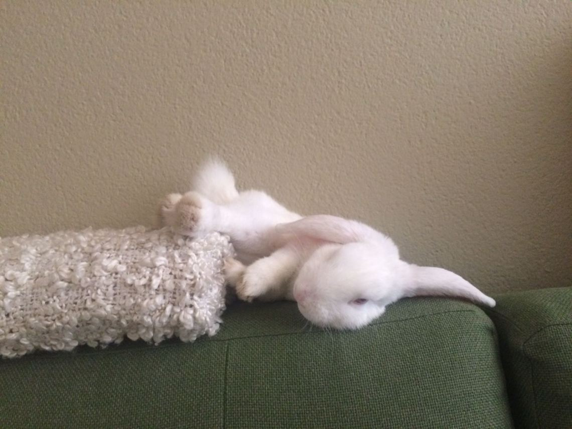 wit konijn slaapt op bank