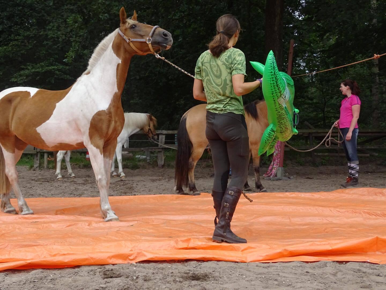 schriktraining voor paarden