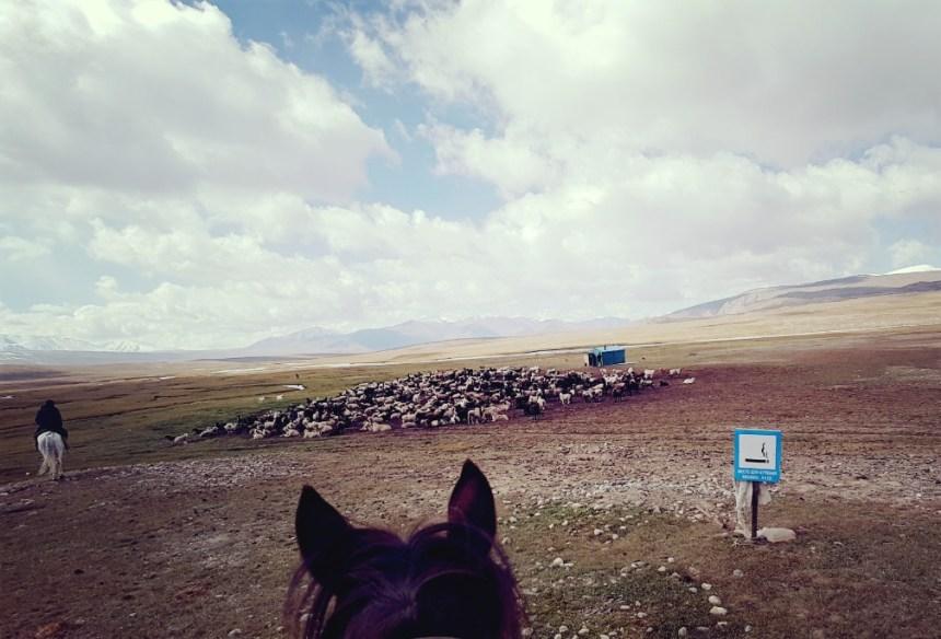Kirgizië bergen kamperen paard schapen