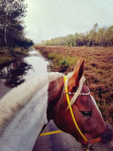 Met je paard door de waterplassen in het bos
