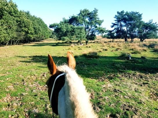 Paardrijden roozendaalse veld