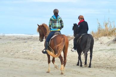 Djerba Tunesië Zitouna Stables paardrijden
