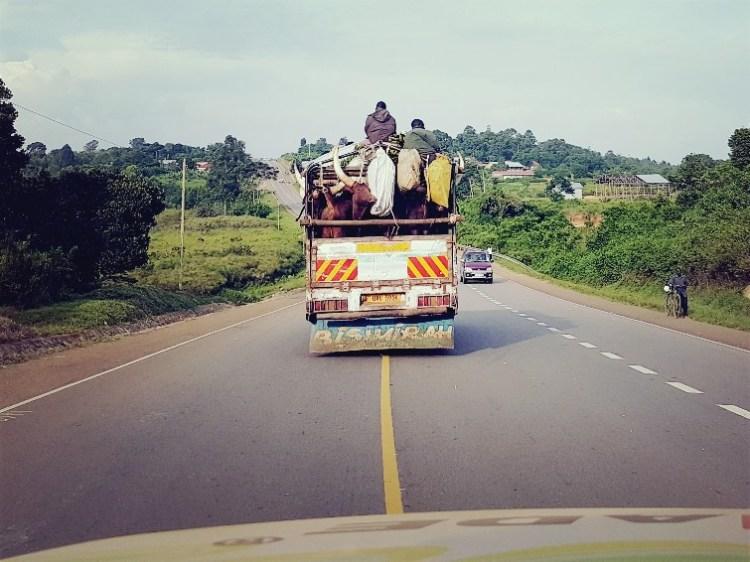 Zielig diertransport