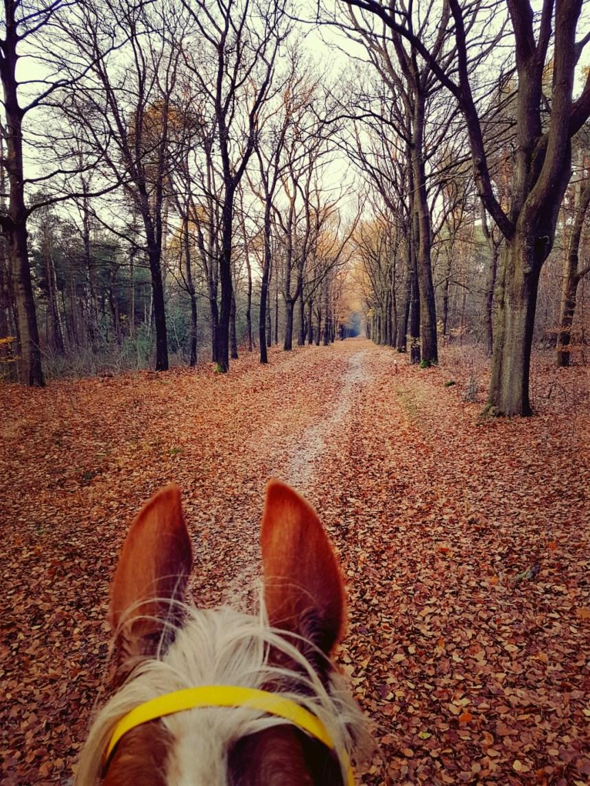 bosrit paardrijden herfst