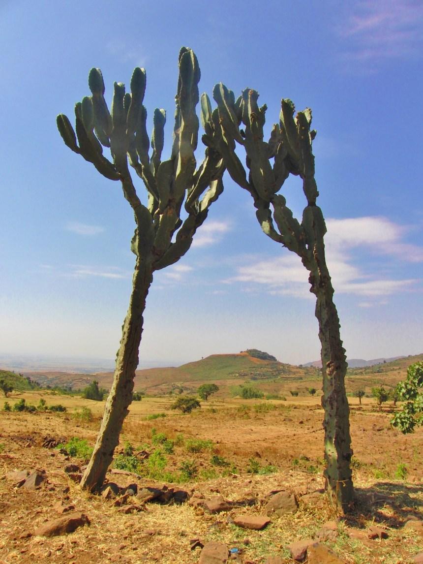 Ethiopië Cactussen dor landschap