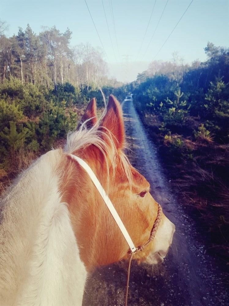 paardrijden, koningshei galoptraining