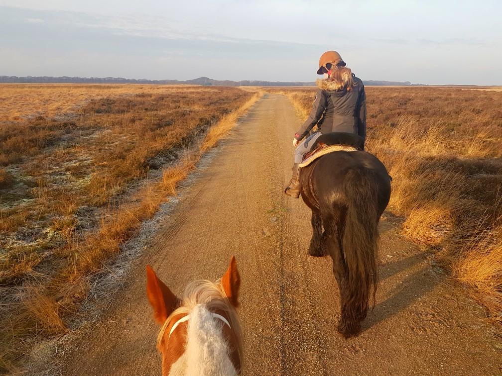 Hoge Veluwe paardrijden