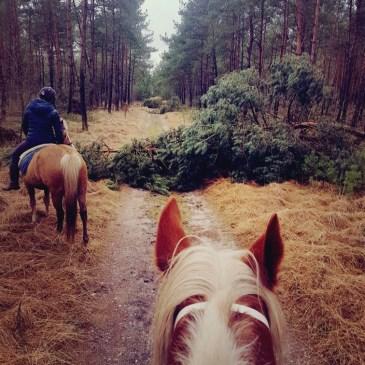 Bos storm paardrijden