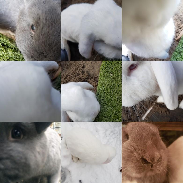 konijnen weekoverzicht