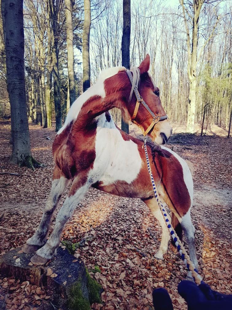 Bont paard op het blok kunstjes