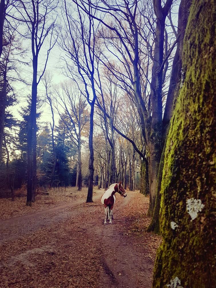 Paard loopt los in het bos