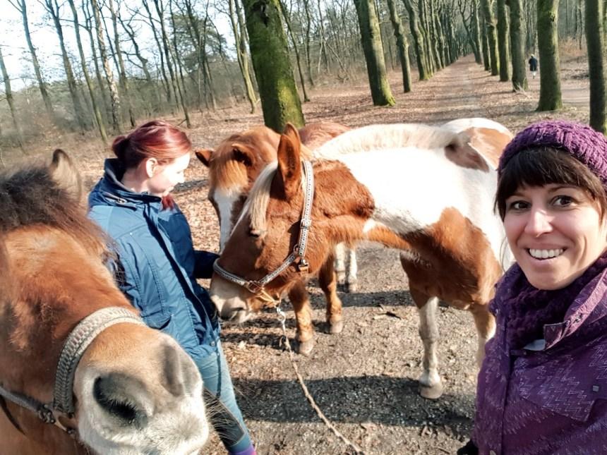 Wandelen met paarden in het bos