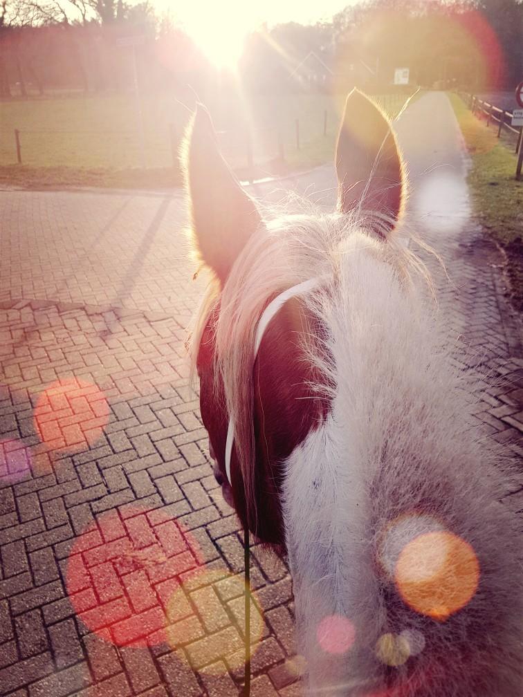 Paardrijden tegenlicht zonsondergang