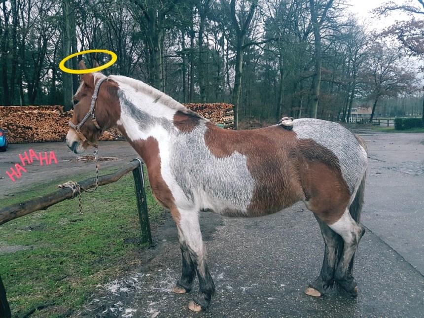Modderig paard
