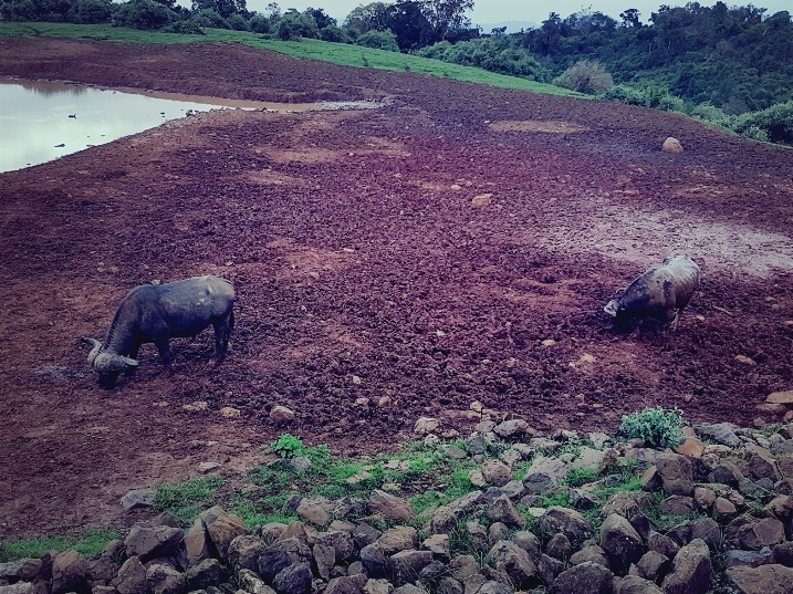 Buffels Aberdare National Park The Ark Lodge Kenia