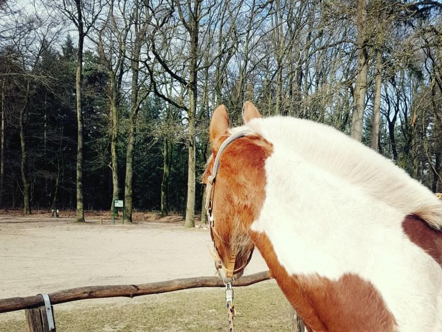 Paard wil niet op foto