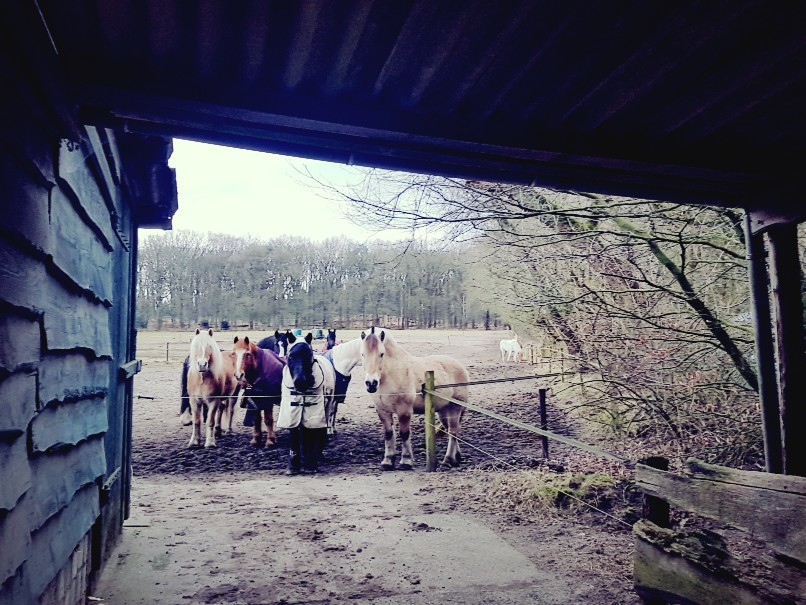 Ponies wachten op eten