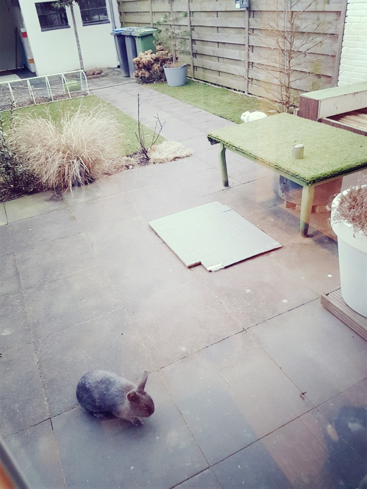 Losgebroken konijnen vangen