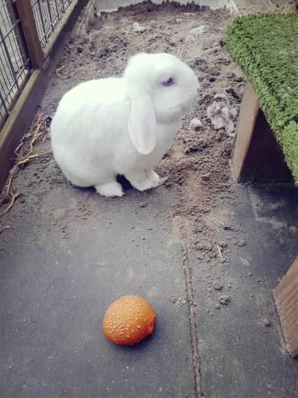 konijn lust snack niet